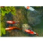 鱼屏保手机验证领58彩金不限id版注册送28体验金的游戏平台